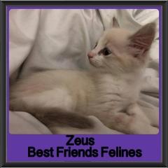 2018 - Zeus