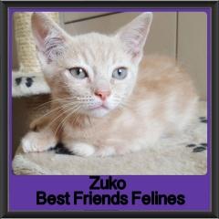 2018 - Zuko