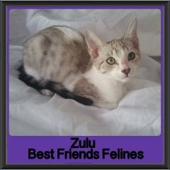 2018 - Zulu