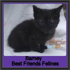2018 - Barney