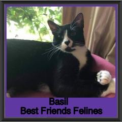 2018-Basil