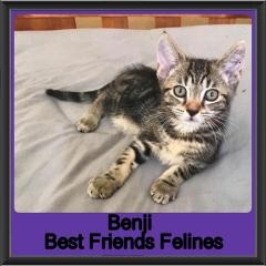 2018 - Benji3