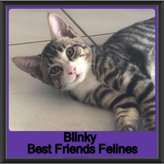 2018 - Blinky