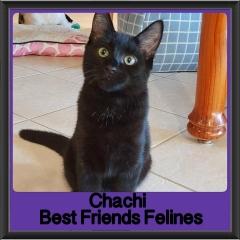 2018 - Chachi