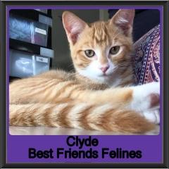 2018 - Clyde