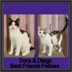 2018 - Dora and Diego