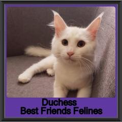 2018 - Duchess2