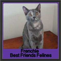 2018 - Frenchie