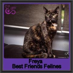 2018 - Freya1