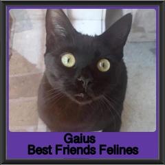 2018-Gaius5