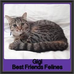 2018 - Gigi