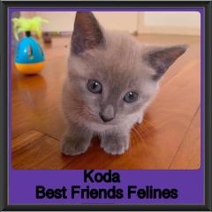 2018 - Koda