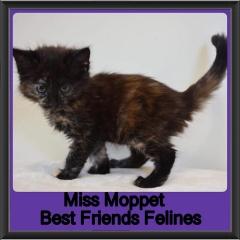 2018 - Miss Moppet