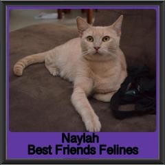 2018 - Naylah1
