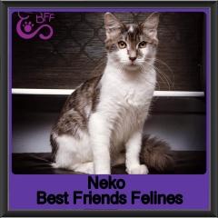 2018 - Neko1