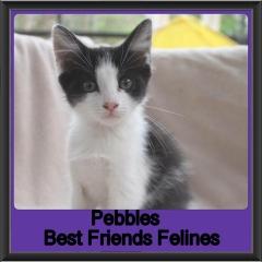 2018 - Pebbles