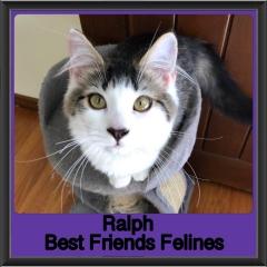 2018 - Ralph1