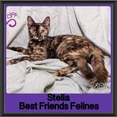 2018 - Stella