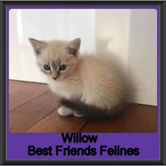 2018 - Willow