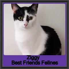 2018 - Ziggy