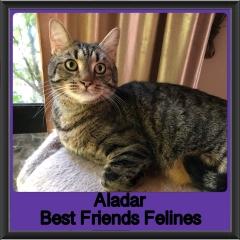 2019 - Aladar