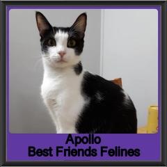 2019 - Apollo