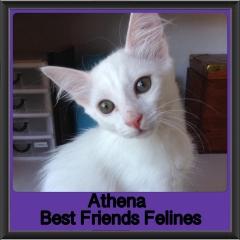 2019 - Athena