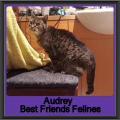 2019-Audrey