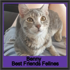 2019-Benny1