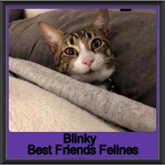 2019-Blinky