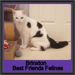 2019-Brinxton