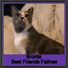 2019-Bronte1