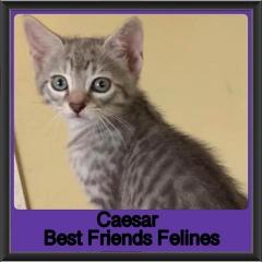 2019 - Caesar