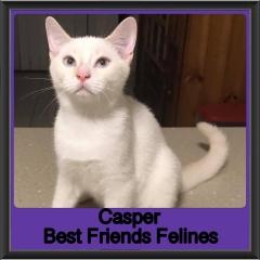 2019 - Casper1