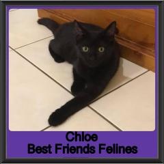 2019 - Chloe