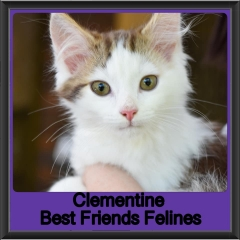 2019-Clementine1