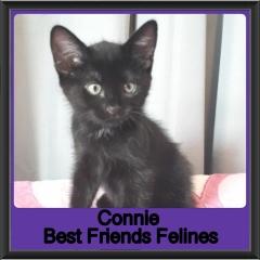 2019-Connie1