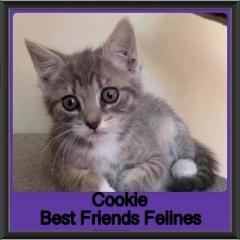 2019-Cookie
