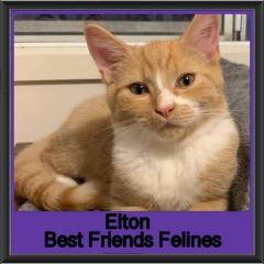 2019-Elton1