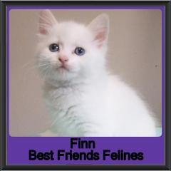 2019-Finn