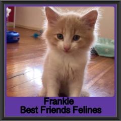 2019 - Frankie