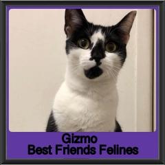 2019-Gizmo1