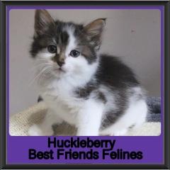 2019-Huckleberry