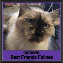 2019 - Isobelle