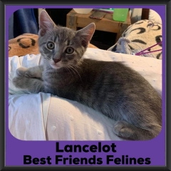 2019-Lancelot1