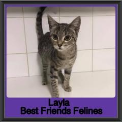 2019-Layla1