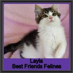 2019-Layla3
