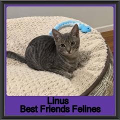 2019-Linus1