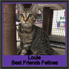 2019 - Louie