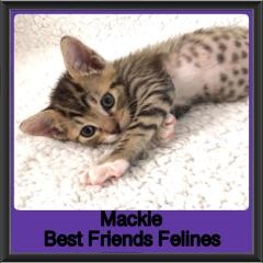 2019-Mackie